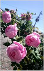 160512122345325_photo