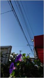 161025074516931_photo